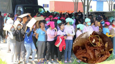 Hàng nghìn công nhân ngưng việc phản đối vì thức ăn có dòi: Tổng giám đốc công ty Panko Tam Thăng nói gì?